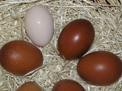 Uova cioccolato con uno bianco rosato