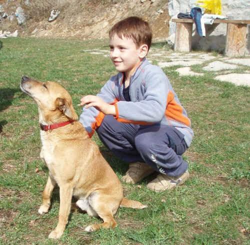 La riabilitazione del cane anziano