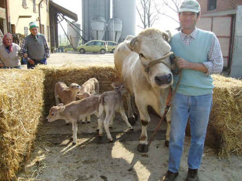 La madre Iena e le 4 vitelle