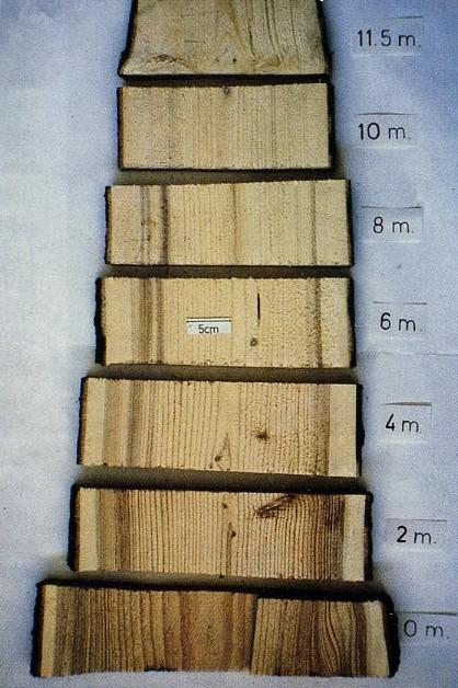 Il marciume delle radici e del fusto delle conifere