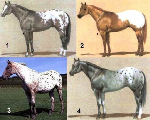 Mantelli dell'Appaloosa