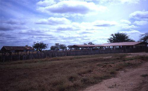 Il semi-arido brasiliano