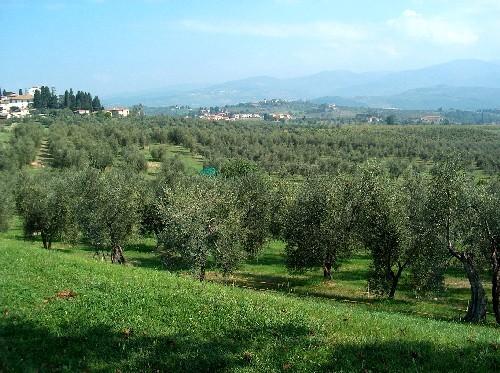 Oliveto