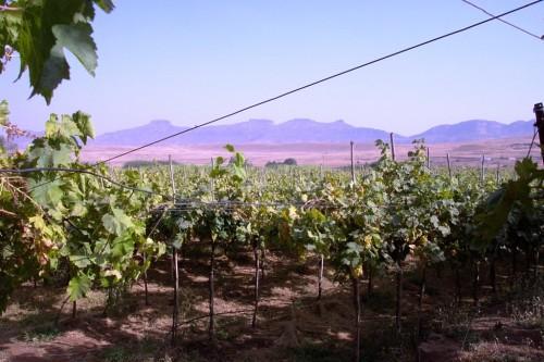 Viti-vinicoltura  in India: quali prospettive?