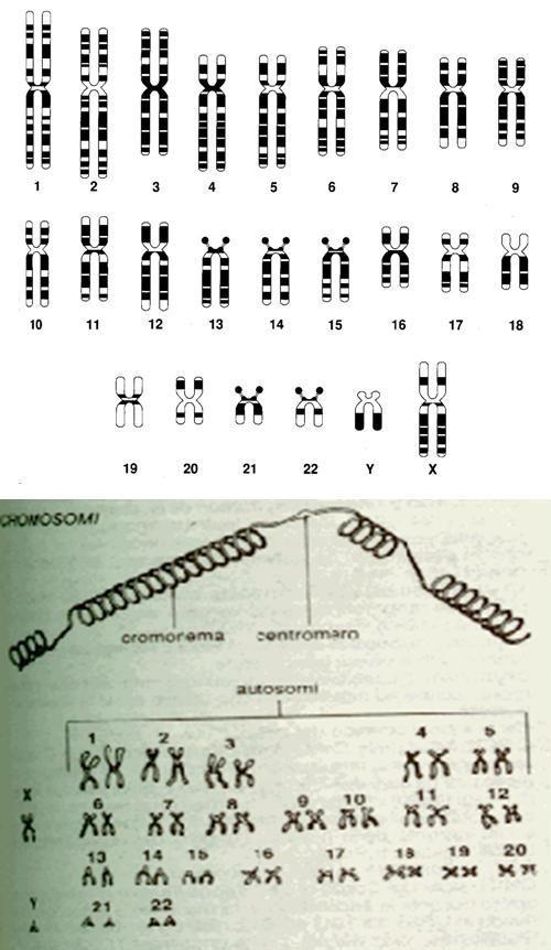 Concetti di miglioramento genetico