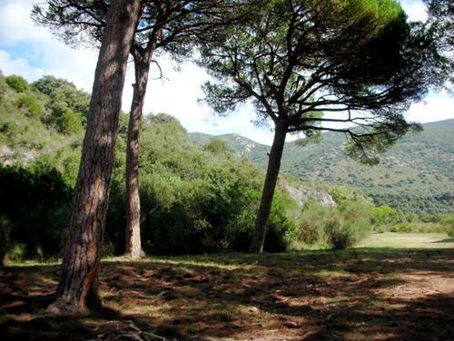 Le risorse forestali della Toscana