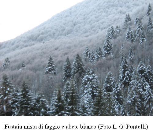 Specie forestali della Toscana