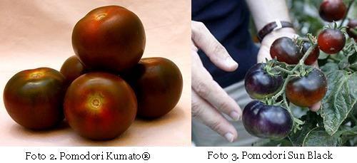 Kumato - Sun Black