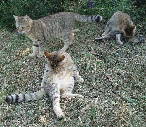 Magico gatto