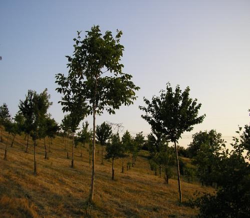 Breve inquadramento di un progetto di arboricoltura da legno