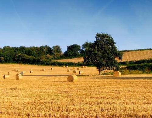 """La programmazione del territorio rurale su scala """"meso"""""""