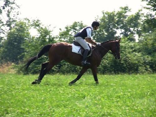 Addestramento di un cavallo: emozioni in movimento