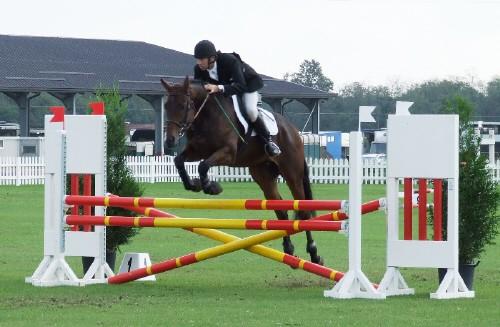 Salto ostacoli : il cuore e l'occhio nell'equitazione