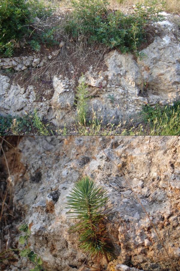 Macchia mediterranea e calcari brecciosi