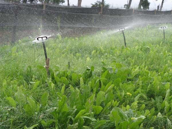 L'irrigazione dei campetti destinati all'allevamento