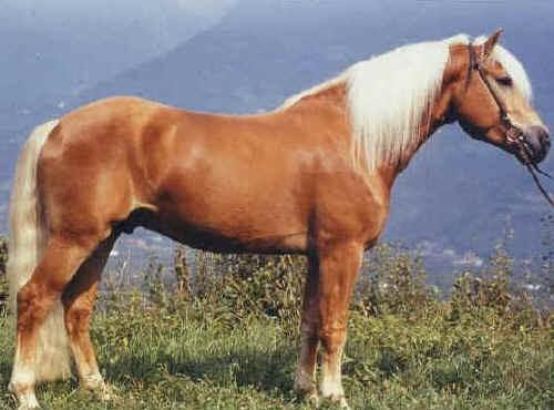Tra realtà e leggenda un breve commento sulla psicologia del cavallo