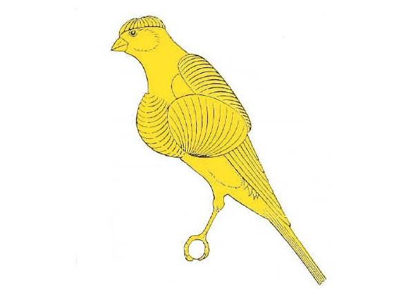 Il Canarino Fiorino, selezione e mostre ornitologiche
