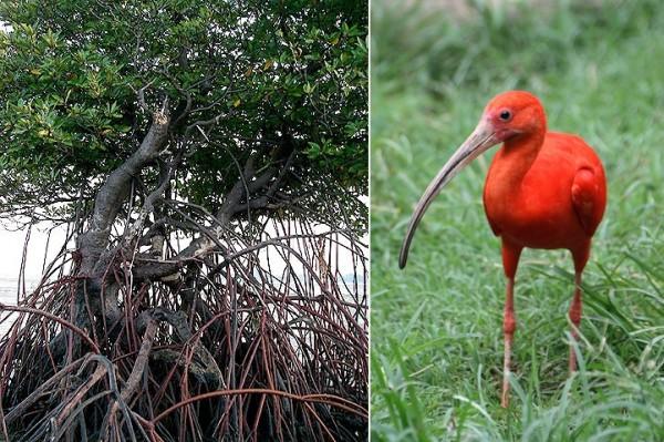 Fauna delle associazioni a Mangrovie e dell'ambiente ipogeo