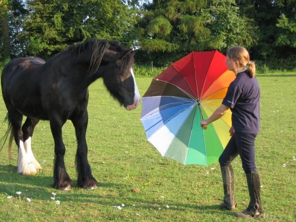 Agire e pensare con il cavallo per ottenere la sua collaborazione