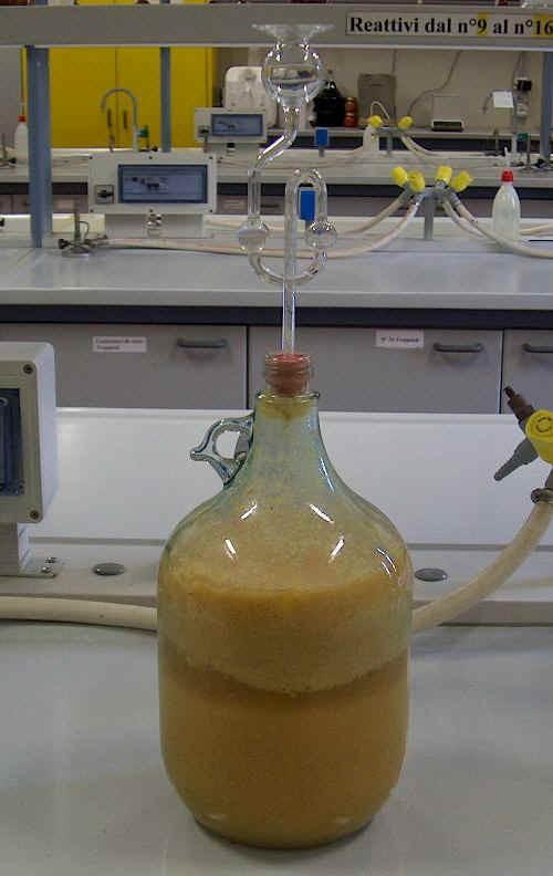 Fiasca con purea di mele in fermentazione