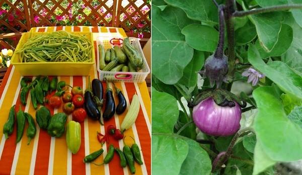 La difesa dell'ambiente e della salute: le stagioni delle colture orticole