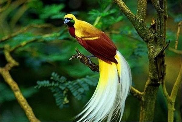 Gli uccelli delle isole dei mari del sud