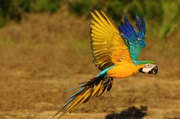 Il medico veterinario aviare: ruolo e utilità