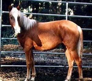 """Il Mustang """"Spirito Selvaggio"""""""