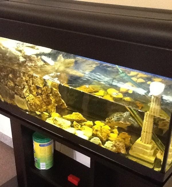 La cura delle tartarughe acquatiche piccola guida per for Acquario per tartarughe grandi