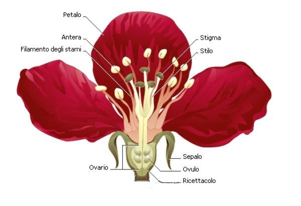 Dal fiore al seme