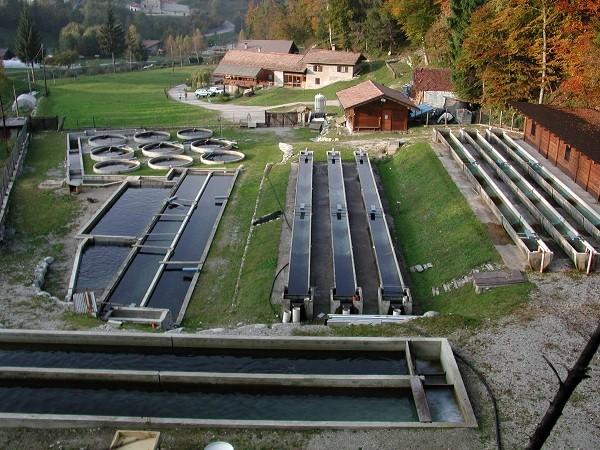 Allevamento di trote in Trentino