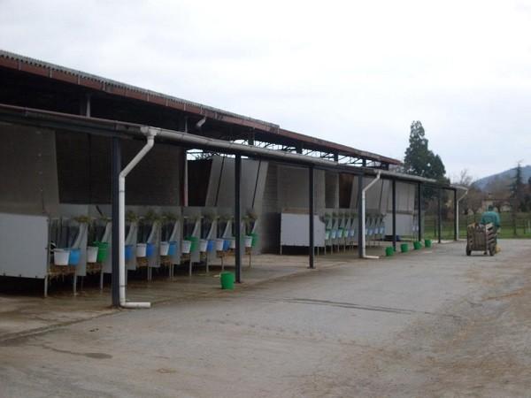 Esercitazione  di Tecnica della produzione animale