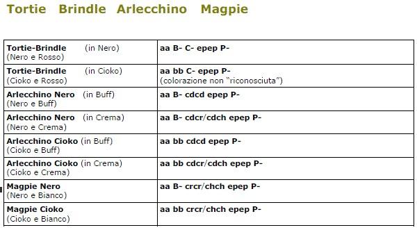Tortie brindle arlecchino magpie