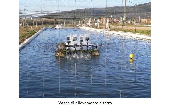 Vasca di allevamento a terra
