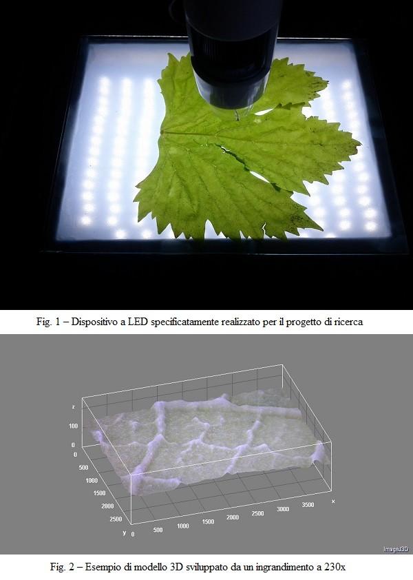 """Analisi dell'immagine e modelli di """"rete idraulica"""" nelle foglie: possibili applicazioni in viticoltura"""