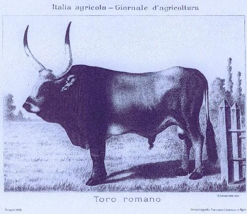 La zootecnia italiana nel 2006: razze, storia e geografia