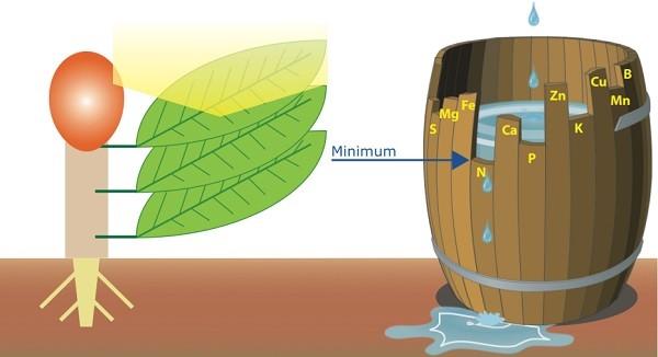 Fertilizzazione: come calcolare la quantità di concime da distribuire alle piante in produzione