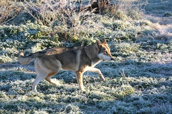 Il cane durante i mesi invernali