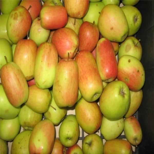 I frutti alla raccolta