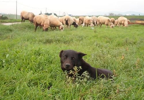 Discendente cane da tocca