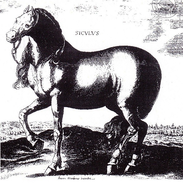 Riproduzione storica del cavallo Siciliano Indigeno
