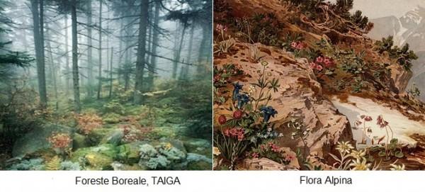 Foresta boreale e Flora alpina