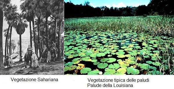 Differenti tipologie di vegetazione