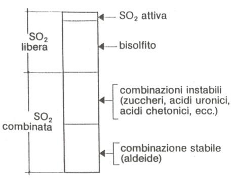 Diverse forme di solforosa presente nel vino