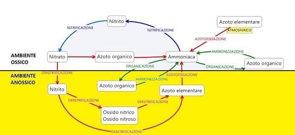 La problematica dei nitrati nelle aziende zootecniche: basi  teoriche e applicazione della normativa