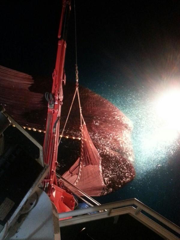 Momento della pesca con lampara