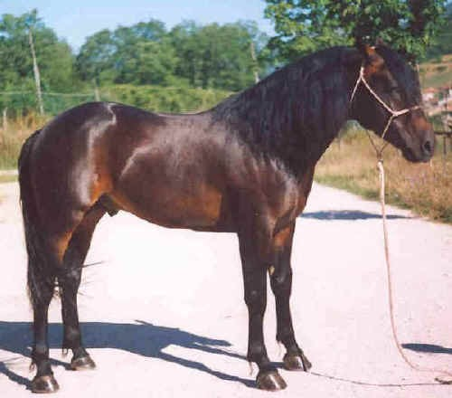 Il Cavallo del Catria tra passato e futuro