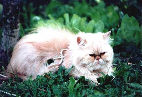Oligoterapia nei piccoli animali