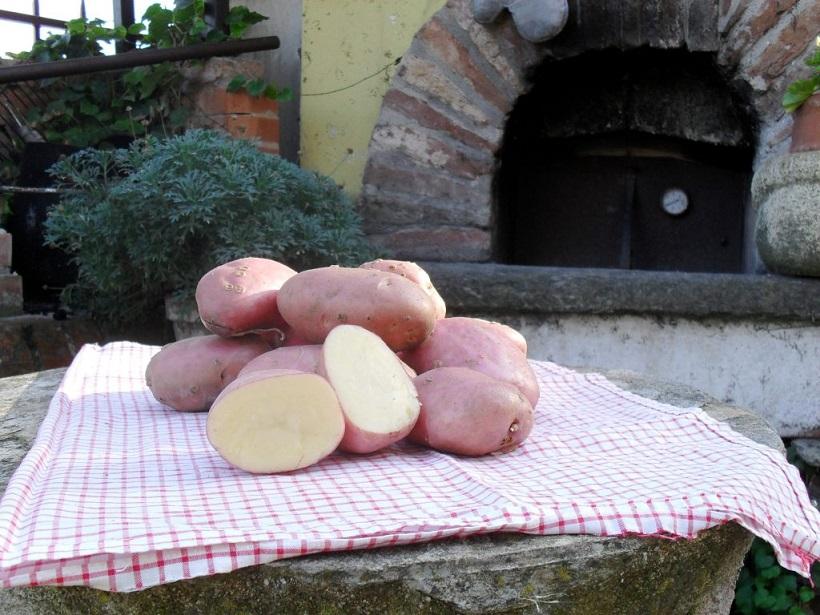 patata rossa ciarda