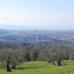 L'ecosistema urbano di Firenze